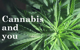 cannabis - information resources for physicians  banner